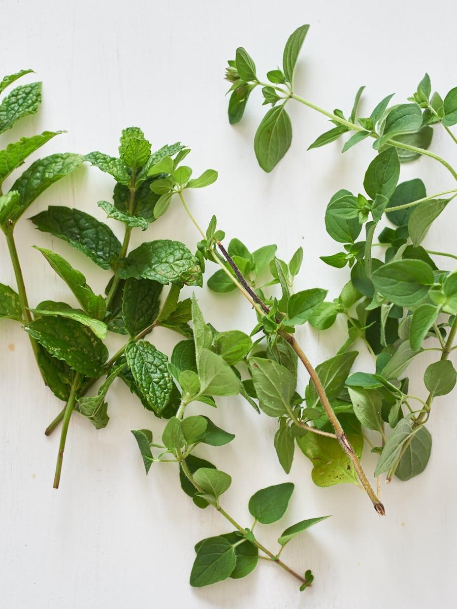 mint and oregano